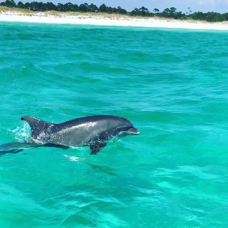 dolphin-shell-island