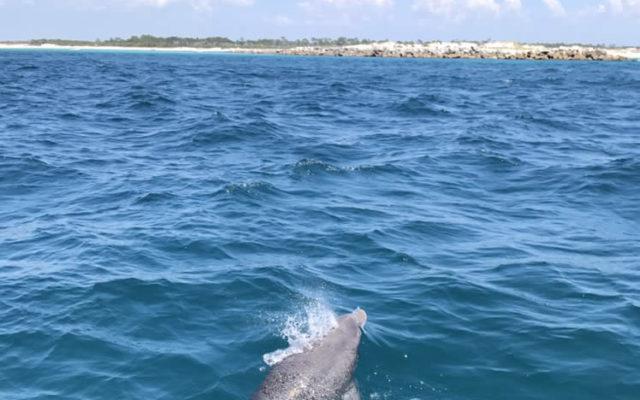 Dolphin Shell Island