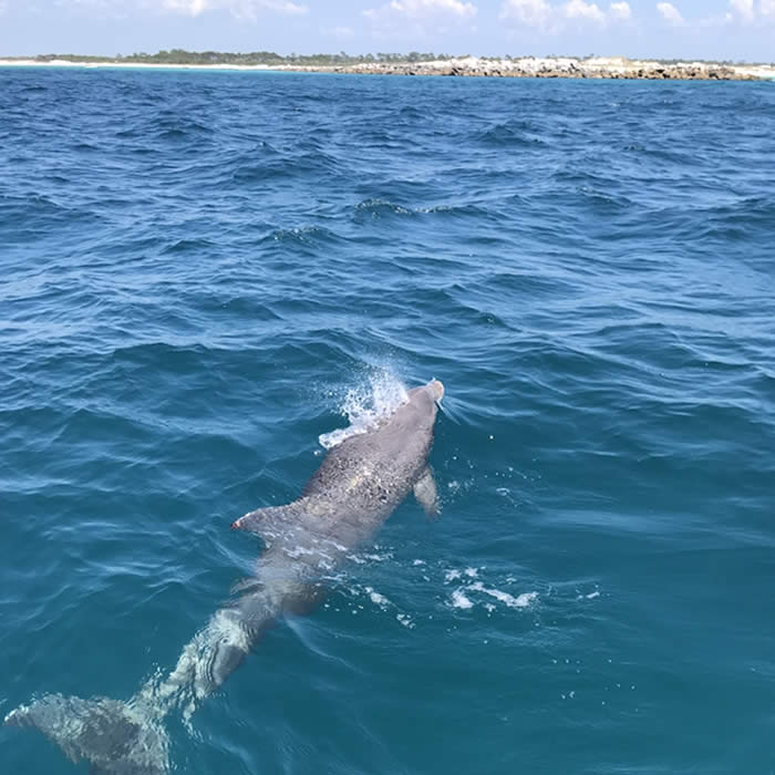 Agape Beach Service dolphin tour Panama City Beach