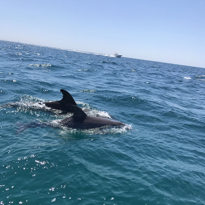 dolphins6a